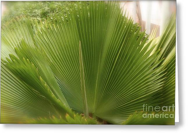 Palm Tree Greeting Card by Paula Deutz