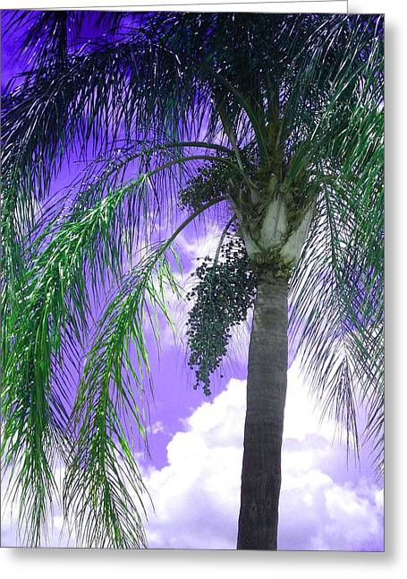 Palm Tree Seeding Greeting Card by Rosalie Scanlon