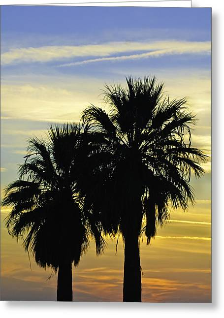 Greeting Card featuring the photograph Palm Tree Silhouette by Sherri Meyer