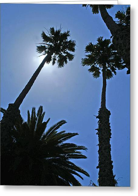 Greeting Card featuring the photograph Palm Tree Silouette by Gary Brandes