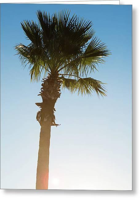 Palm Tree Sunrise Greeting Card by Steve Gadomski