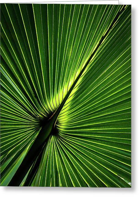 Palm Tree With Back-light Greeting Card