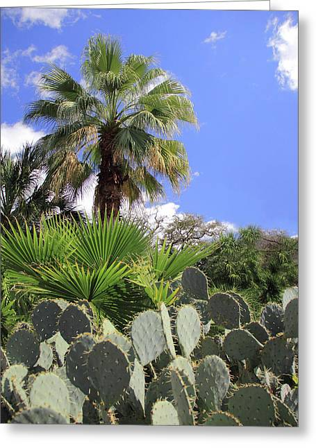 Palm Trees And Cactus Greeting Card