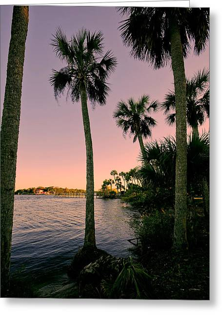 Palm Trees And Pink Skies Greeting Card by Laura DAddona