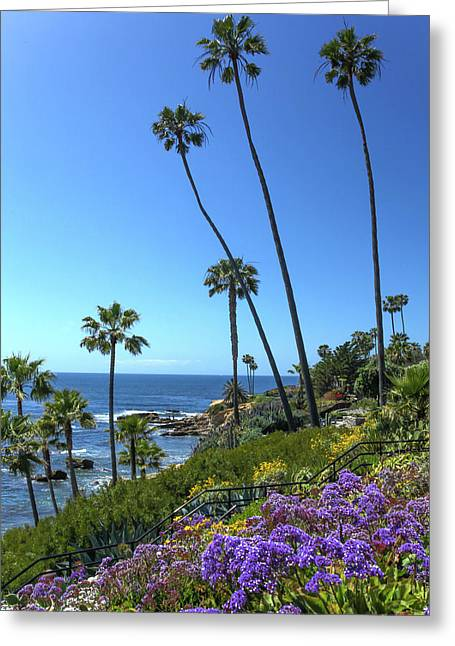 Greeting Card featuring the photograph Palm Trees At Heisler Park by Cliff Wassmann