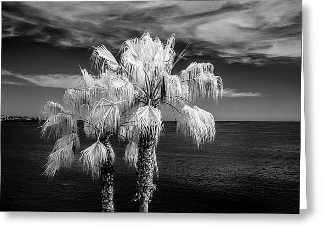 Palm Trees At Laguna Beach In Infrared Black And White Greeting Card by Randall Nyhof