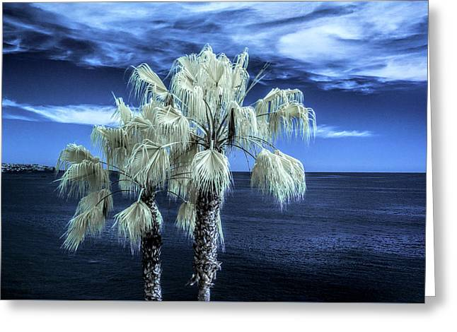 Palm Trees At Laguna Beach In Infrared Greeting Card by Randall Nyhof