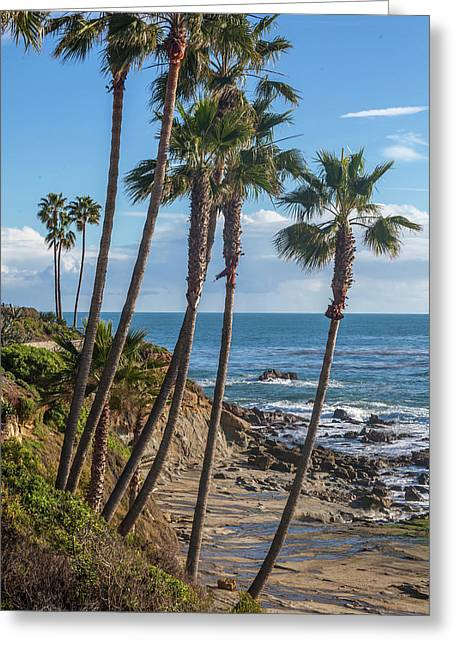 Greeting Card featuring the photograph Palm Trees At Monument Point Laguna Beach by Cliff Wassmann