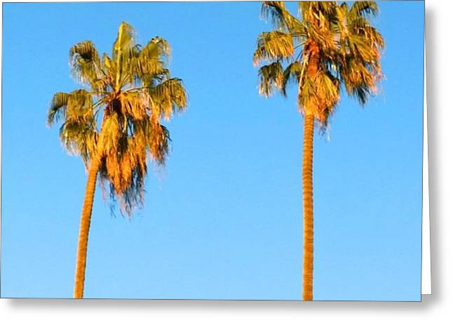 #palm #trees At Sunset. #california Greeting Card
