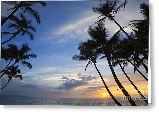 Palm Trees At Sunset, Keawekapu Beach Greeting Card by Ron Dahlquist