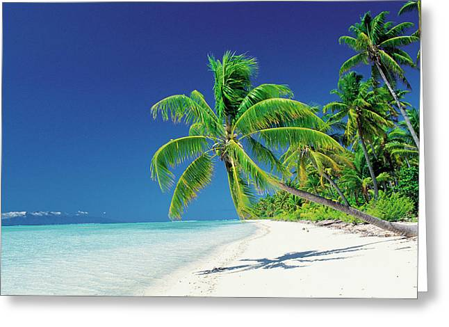 Palm Trees Bending Over The Beach Greeting Card