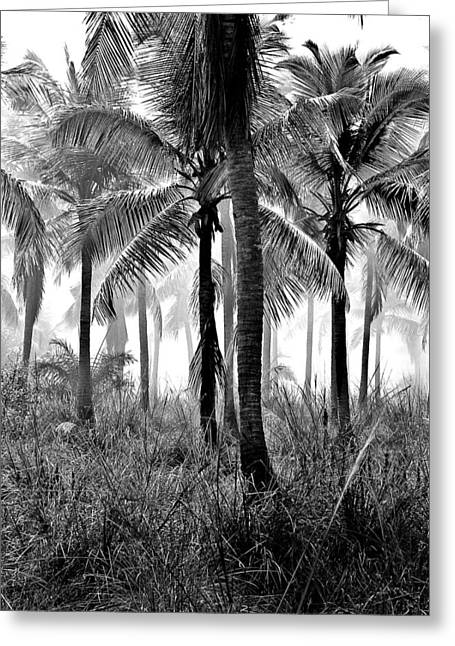 Palm Trees - Black And White Greeting Card