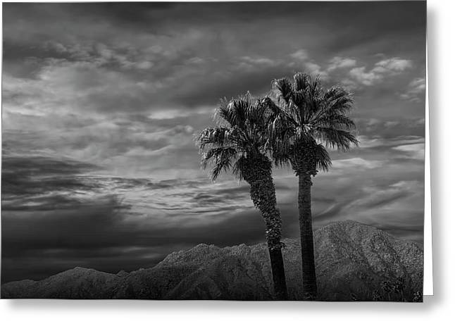 Greeting Card featuring the photograph Palm Trees By Borrego Springs In Black And White by Randall Nyhof