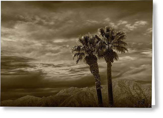 Greeting Card featuring the photograph Palm Trees By Borrego Springs In Sepia Tone by Randall Nyhof