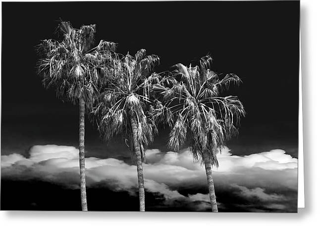 Greeting Card featuring the photograph Palm Trees In Black And White On Cabrillo Beach by Randall Nyhof
