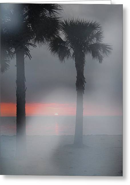Palm Trees In The Fog Greeting Card by Penfield Hondros