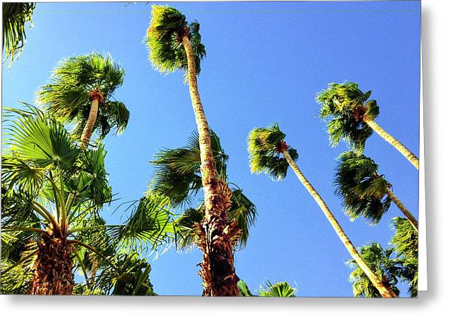 Palm Trees Looking Up Greeting Card