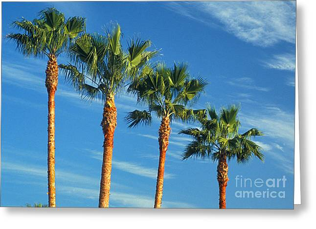 Palm Trees Greeting Card by Marc Bittan