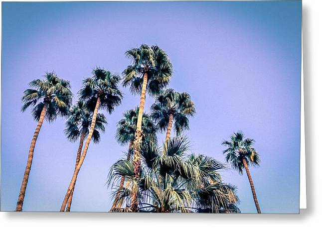Palm Trees Palm Springs Summer Greeting Card