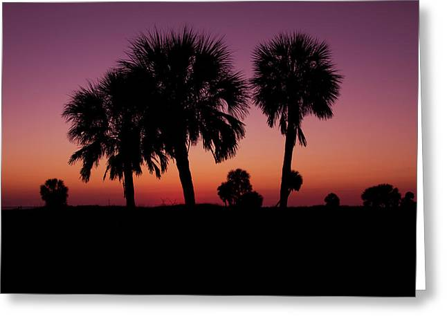 Greeting Card featuring the photograph Palm Trees Silhouette by Joel Witmeyer