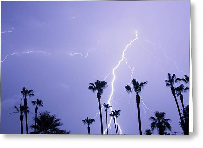 Photography Lightning Photographs Greeting Cards - Palm Trees Stormy Weather Greeting Card by James BO  Insogna