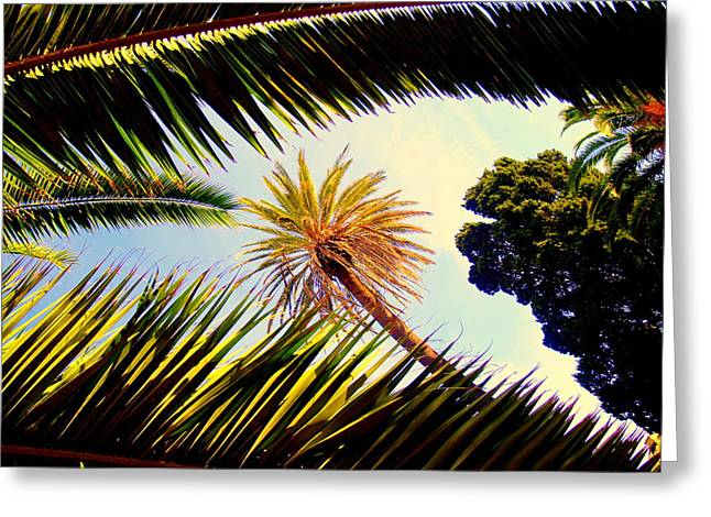 Palm Trees Greeting Card by Ted Hebbler