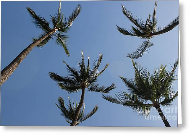 Greeting Card featuring the photograph Palm Trees by Wilko Van de Kamp