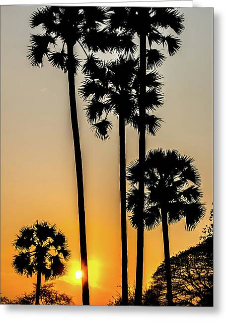 Palme At Sunset Greeting Card by Cesare Palma