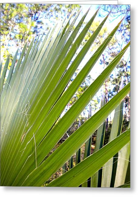 Greeting Card featuring the painting Palmetto 1 by Renate Nadi Wesley