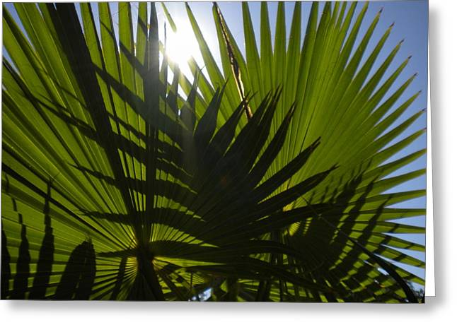 Greeting Card featuring the photograph Palmetto 3 by Renate Nadi Wesley