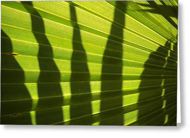 Greeting Card featuring the photograph Palmetto 4 by Renate Nadi Wesley