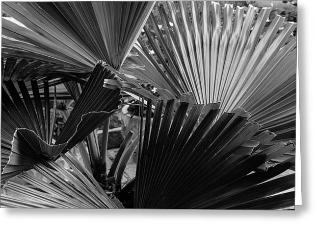 Palmetto In Black And White Greeting Card