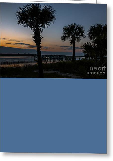 Palmetto Sky Greeting Card