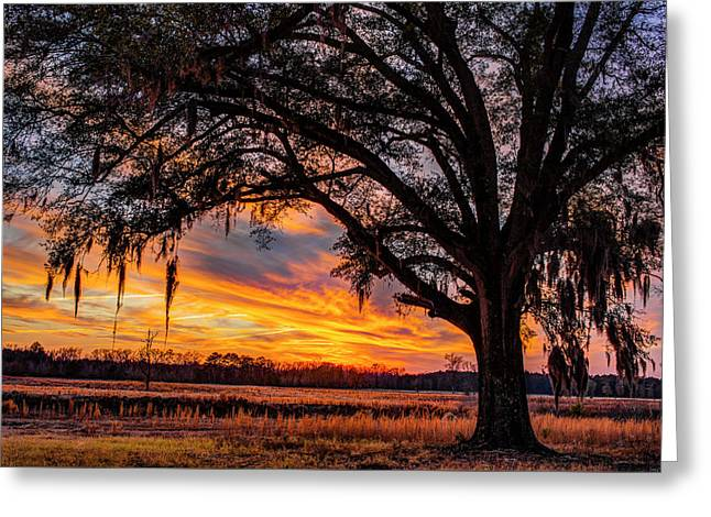 Palmetto Sunset Greeting Card by Chris Austin