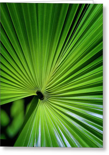 Palmgreen Greeting Card