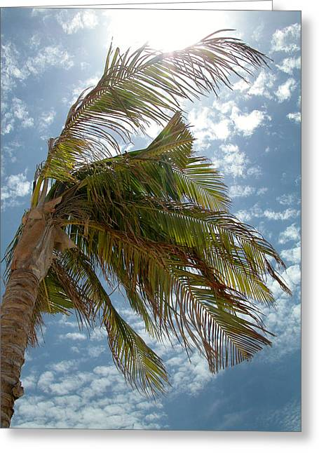Palms Against The Sky - Mexico Greeting Card