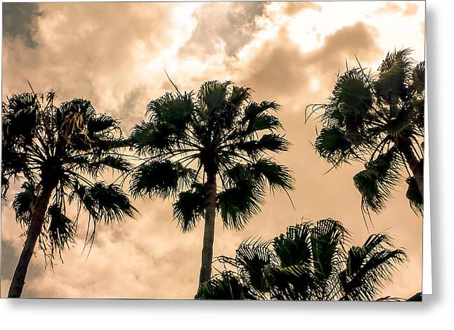 Palms Against The Sky Greeting Card