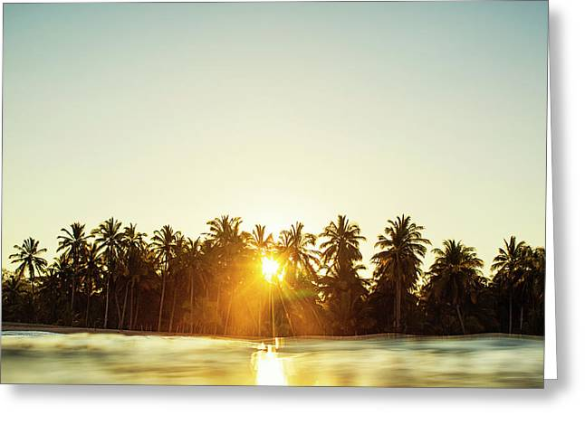Palms And Rays Greeting Card