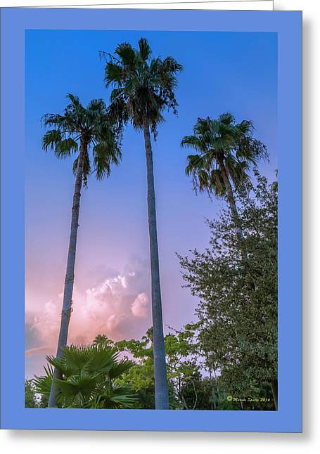 Palms And Storms Greeting Card by Marvin Spates