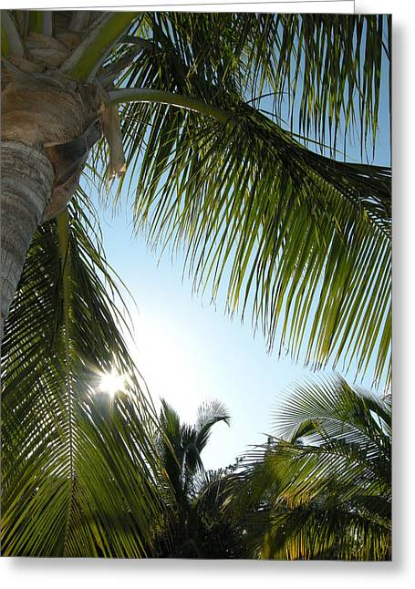 Palms Greeting Card by Audrey Venute