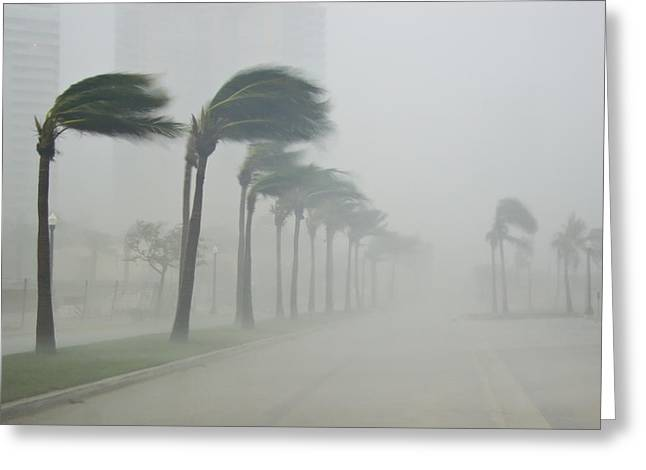 Palms Blow In 100 Mile-per-hour Winds Greeting Card