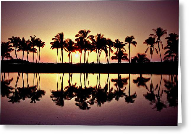 Palms In Silhouette Greeting Card by Michael  Cryer