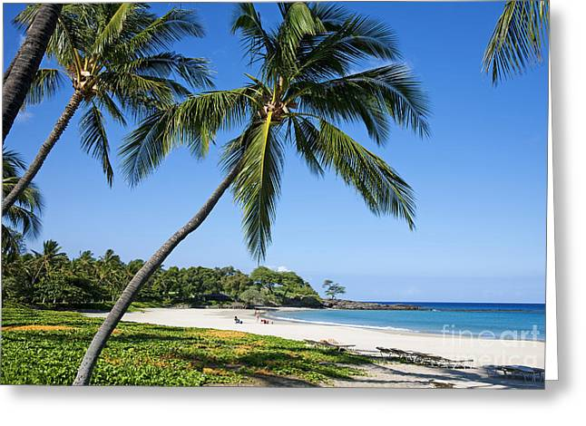Palms Over Beach II Greeting Card by Ron Dahlquist - Printscapes