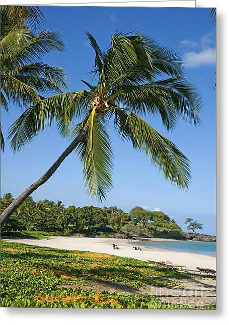 Palms Over Beach Greeting Card by Ron Dahlquist - Printscapes