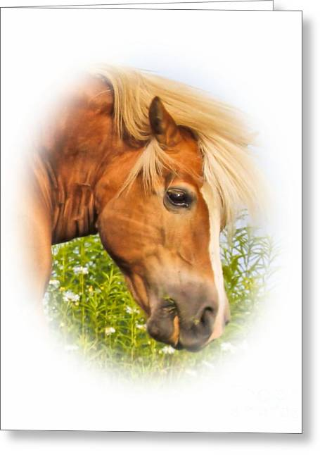 Greeting Card featuring the photograph Palomino Head by Debbie Stahre