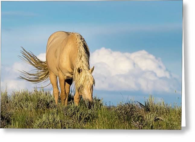 Palomino Wild Stallion In The Evening Light Greeting Card
