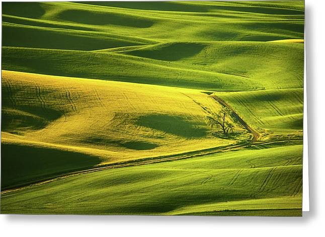 Greeting Card featuring the photograph Palouse Shades Of Green by Dan Mihai