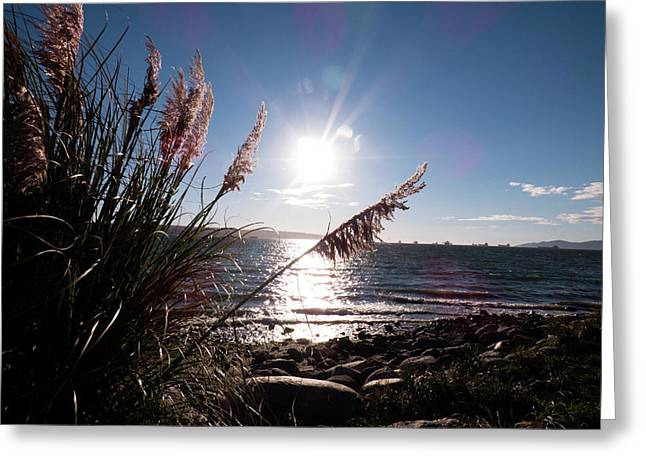 Pampas By The Sea Greeting Card