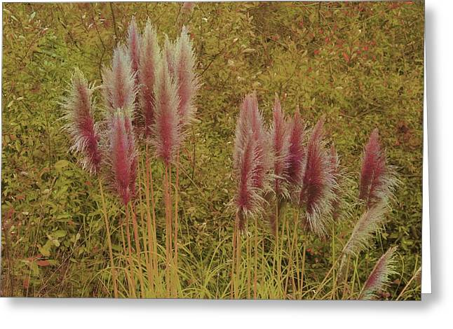 Greeting Card featuring the photograph Pampas Grass by Athala Carole Bruckner