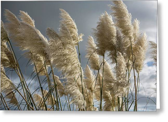 Pampas Grass Greeting Card